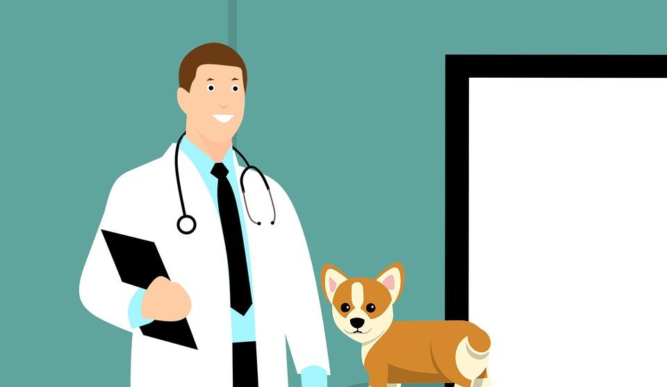 تطبيقات لطب البيطري للأندرويد